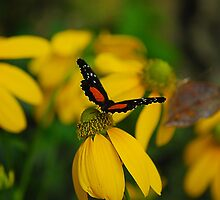 Butterfly Landing Softly by Maria Martinez