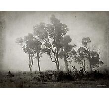 Misty Field Photographic Print