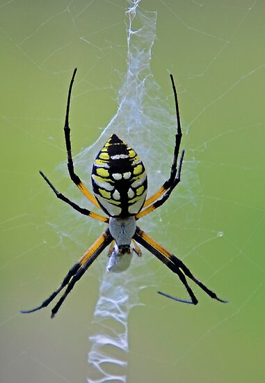 Sit Down Beside Her (Spider) by TJ Baccari Photography