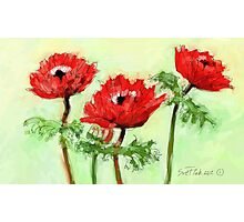 Four Red Flowers - 2012 Photographic Print