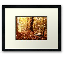 A Forest Bench in a Fall Scene Framed Print