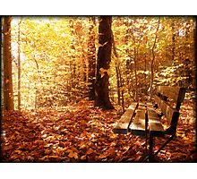 A Forest Bench in a Fall Scene Photographic Print