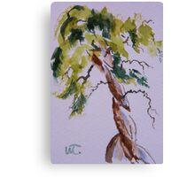 Cypress Curves Canvas Print