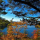 Meech Lake viewed through Fall Foliage by Chantal PhotoPix