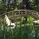 Japanese Garden -- Maymont by AJ Belongia