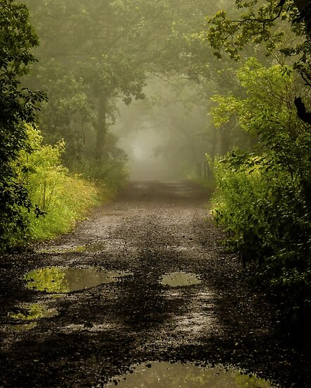 Misty Woodland Lane II by John Dunbar