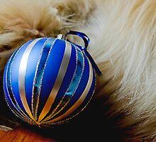 Have a Pawsome Christmas by kraMPhotografie