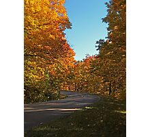 A Country Road lined with Yellow Leaved Trees Photographic Print