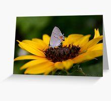 Gray Hairstreak on Sunflower Greeting Card