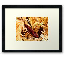 Decorative Red and Yellow Indian Corn Framed Print