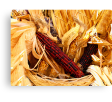 Decorative Red and Yellow Indian Corn Canvas Print