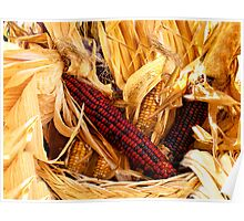 Decorative Red and Yellow Indian Corn Poster