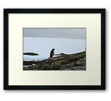 Lone Penguin Framed Print