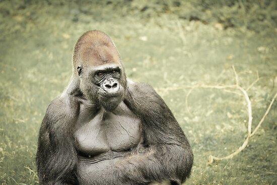 gorilla by sanngat