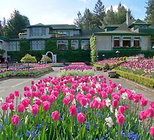 Butchart Gardens - Tulips and house by DPalmer