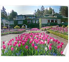 Butchart Gardens - Tulips and house Poster