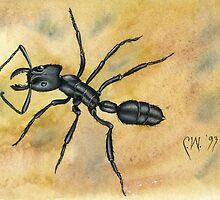 Black Ant by Carolyn Watson-Dubisch