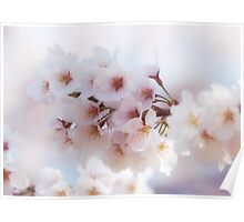 Sakura Cherry Blossom Poster