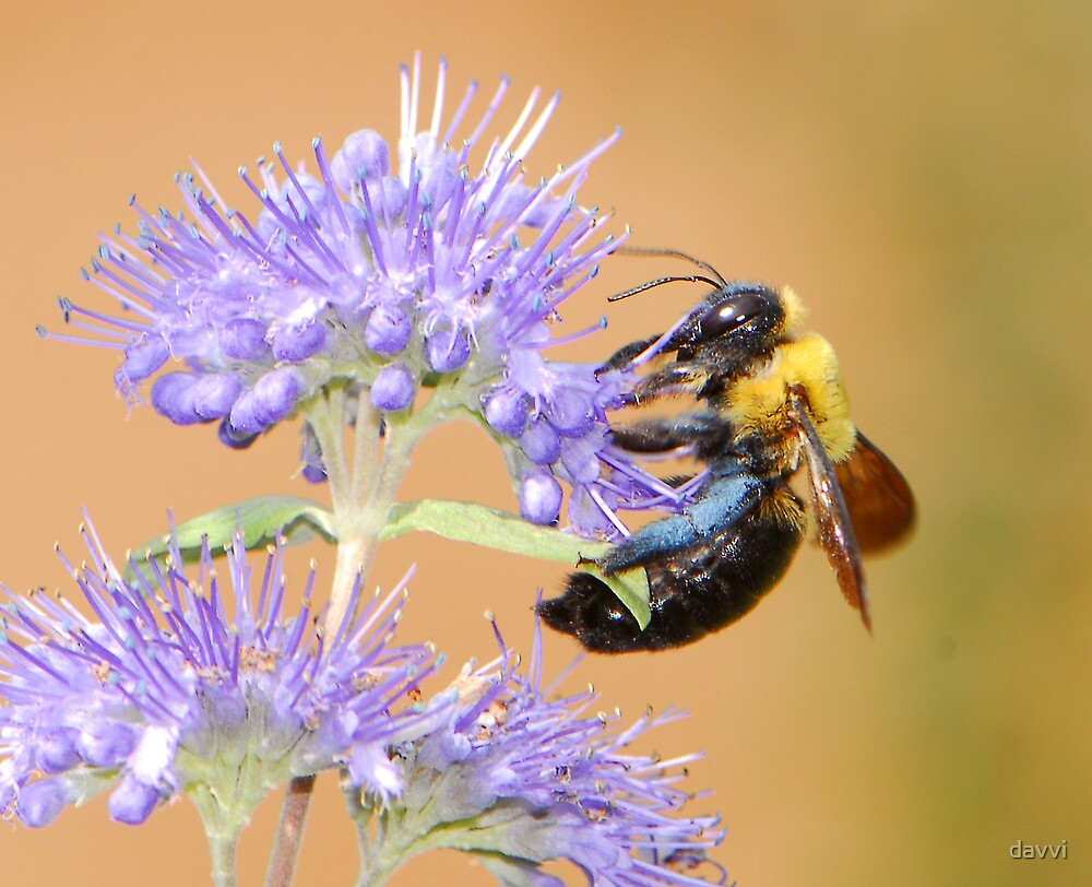 Autumn bee by davvi