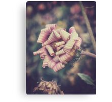 sweet pink african daisy Canvas Print