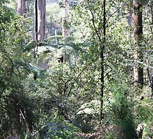 In the rainforest by Trevor Corran