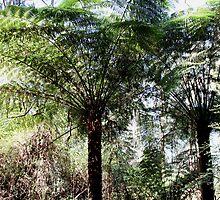 Dandenongs, rain forest by Trevor Corran