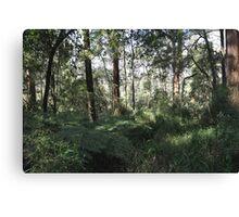 Dandenong rain forest Canvas Print
