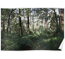 Dandenong rain forest Poster