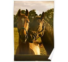 Perfecting The Pose- (Thoroughbred Mares) Poster