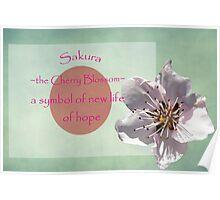 Japanese Sakura  Poster