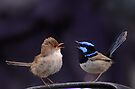 A riot of wrens . by Donovan wilson