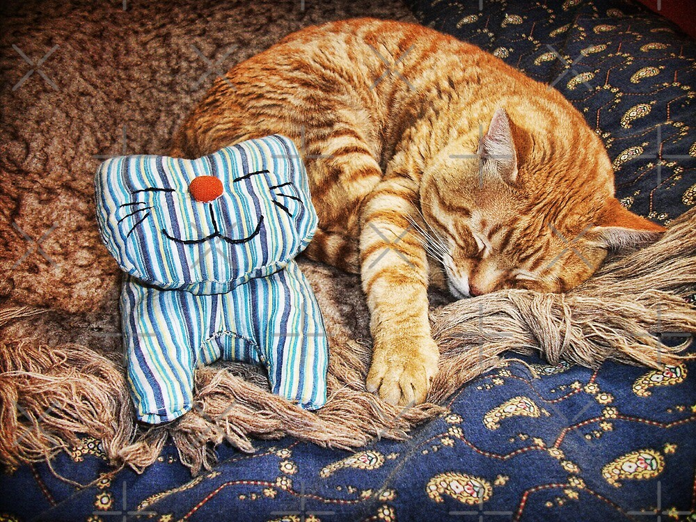 Cat Naps by Maria  Gonzalez