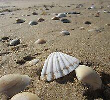 Shell Beach - Tasmania by cactus82