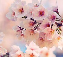 Japanese Sakura Cherry Blossom by mikeofthethomas
