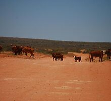 Stock Crossing on Outback Track - Western Australia by cactus82