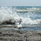 The Sea-gull by Happiness         Desiree