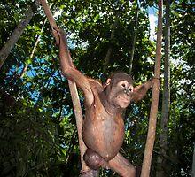 Forest School by Orangutans