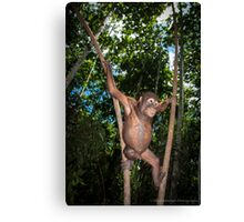 Forest School Canvas Print