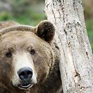 Beary Brown Bear by Doty