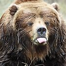 Sticking tongue out Bear by Doty