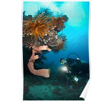 Diver inspecting sea sponge Poster