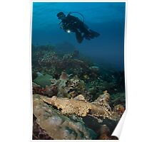 Diver and large crocodile fish  Poster