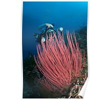 Underwater photographer with vivid red coral Poster