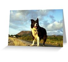 Indy: A Collie For All Seasons. Greeting Card