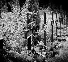 lost cemetery by Gary Busch