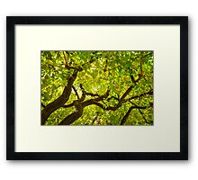 Color Tree Framed Print