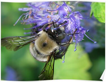 Busy Buzz by Eileen McVey
