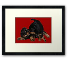 Rottweiler Puppies Playing Vector Isolated Framed Print