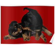 Rottweiler Puppies Playing Vector Isolated Poster