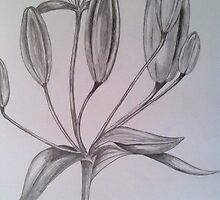 Lily Buds by Lorelle Gromus